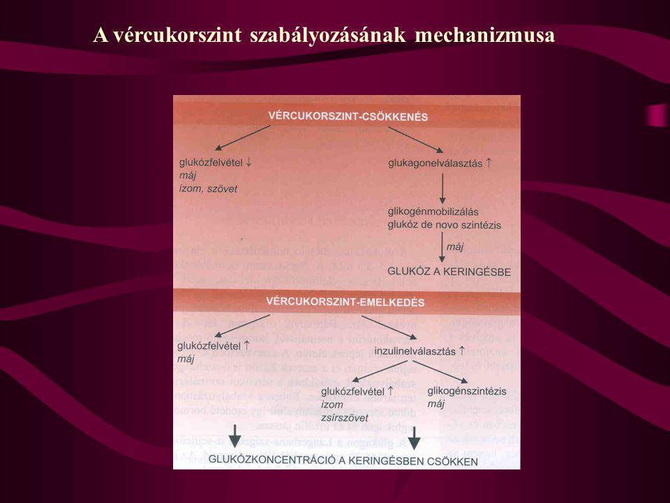 Az inzulin érési folyamata A-lánc: 21 aminosav, egy láncon belüli diszulfidhíd B-lánc: 30 aminosav, a két láncot kettő diszulfidhíd köti össze C-pepti