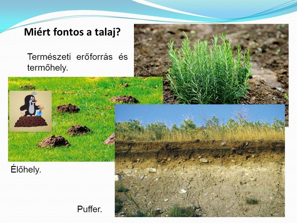 6 Miért fontos a talaj? Természeti erőforrás és termőhely. Élőhely. Puffer.