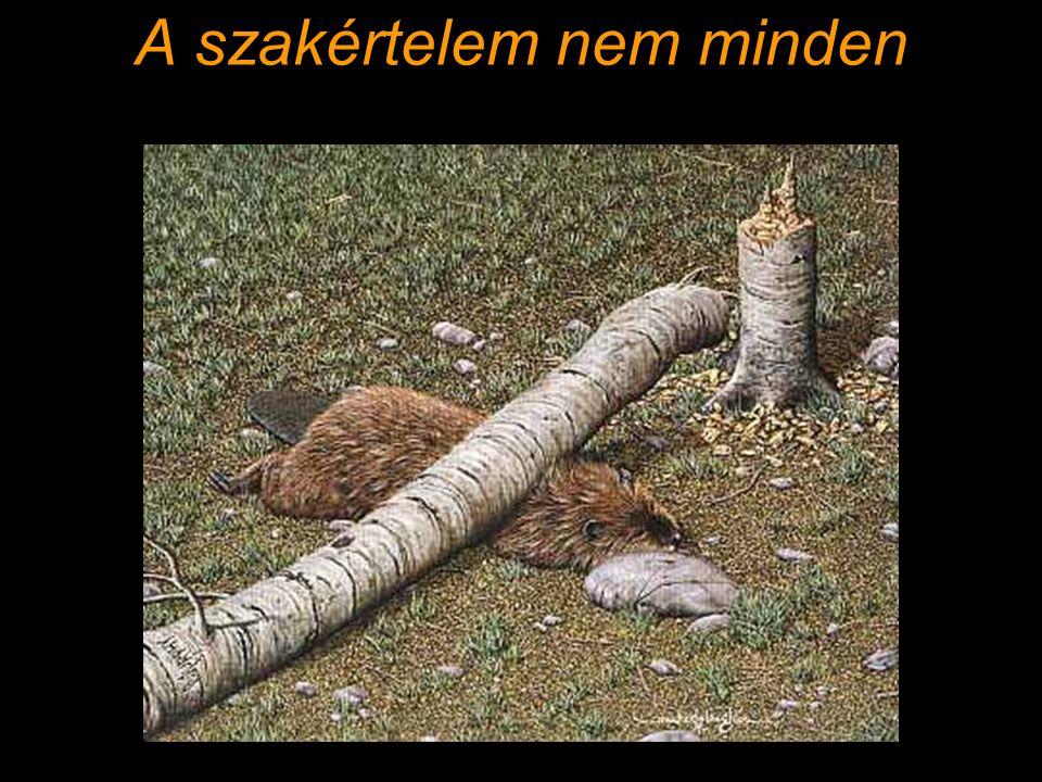 Probléma terület(ek) Projektek előkészítése (SZINTE NINCS) !!.