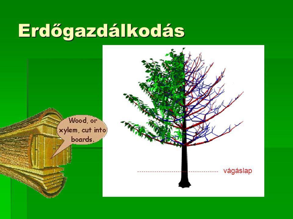 Erdészeti biomassza (millió m 3 /év)
