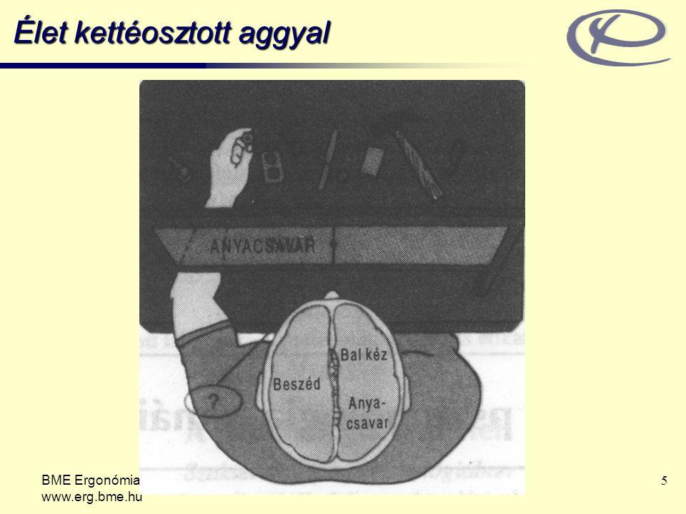 BME Ergonómia és Pszichológia Tanszék www.erg.bme.hu 16 Biológiai nézőpont A viselkedést és a mentális folyamatokat elsődlegesen genetikai tényezők, az agy elektromos és kémiai aktivitása és a hormonális folyamatok határozzák meg.