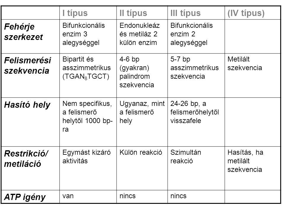 I típusII típusIII típus(IV típus) Fehérje szerkezet Bifunkcionális enzim 3 alegységgel Endonukleáz és metiláz 2 külön enzim Bifunkcionális enzim 2 alegységgel Felismerési szekvencia Bipartit és asszimmetrikus (TGAN 8 TGCT) 4-6 bp (gyakran) palindrom szekvencia 5-7 bp asszimmetrikus szekvencia Metilált szekvencia Hasító hely Nem specifikus, a felismerő helytől 1000 bp- ra Ugyanaz, mint a felismerő hely 24-26 bp, a felismerőhelytől visszafele Restrikció/ metiláció Egymást kizáró aktivitás Külön reakcióSzimultán reakció Hasítás, ha metilált szekvencia ATP igény vannincs