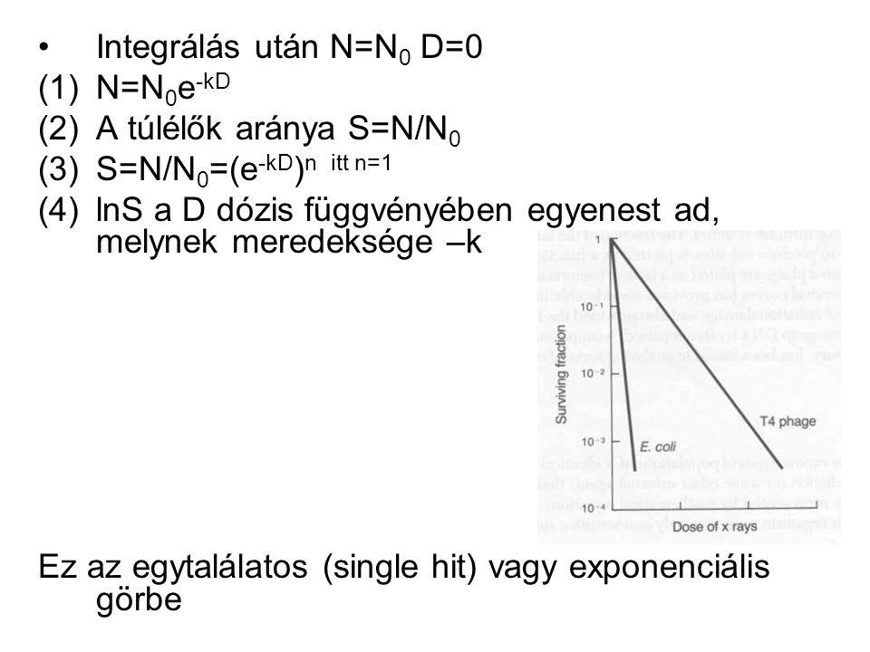 Integrálás után N=N 0 D=0 (1)N=N 0 e -kD (2)A túlélők aránya S=N/N 0 (3)S=N/N 0 =(e -kD ) n itt n=1 (4)lnS a D dózis függvényében egyenest ad, melynek meredeksége –k Ez az egytalálatos (single hit) vagy exponenciális görbe