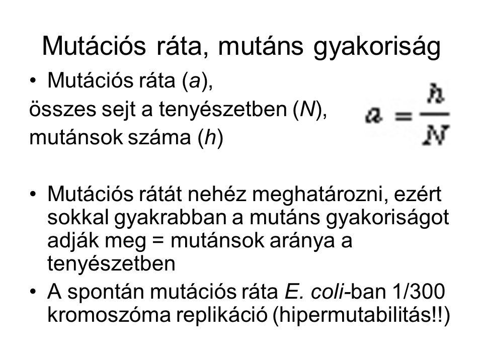 Mutációs ráta, mutáns gyakoriság Mutációs ráta (a), összes sejt a tenyészetben (N), mutánsok száma (h) Mutációs rátát nehéz meghatározni, ezért sokkal gyakrabban a mutáns gyakoriságot adják meg = mutánsok aránya a tenyészetben A spontán mutációs ráta E.