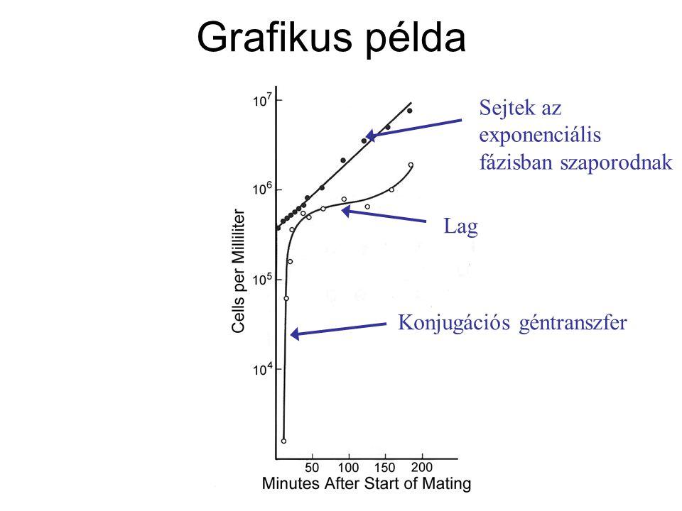 Grafikus példa Sejtek az exponenciális fázisban szaporodnak Konjugációs géntranszfer Lag