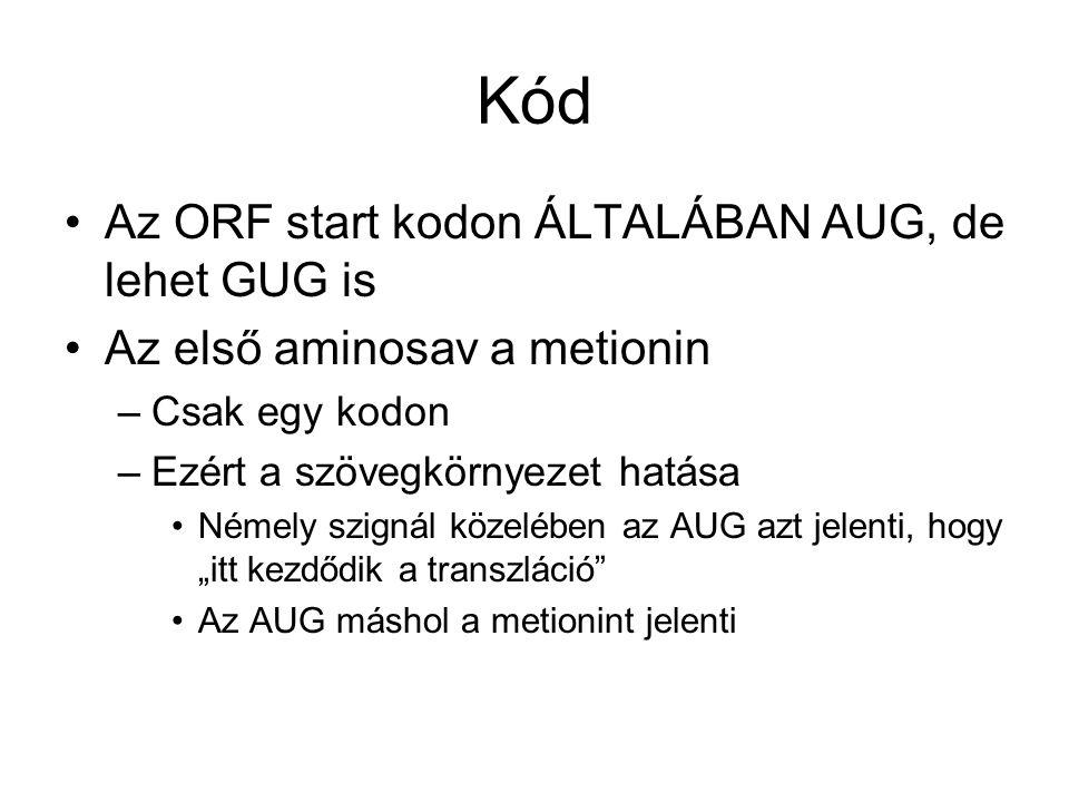 """Kód Az ORF start kodon ÁLTALÁBAN AUG, de lehet GUG is Az első aminosav a metionin –Csak egy kodon –Ezért a szövegkörnyezet hatása Némely szignál közelében az AUG azt jelenti, hogy """"itt kezdődik a transzláció Az AUG máshol a metionint jelenti"""