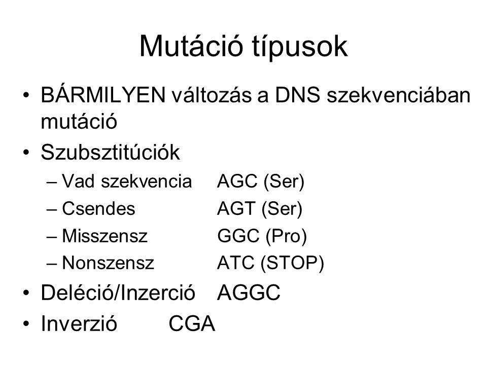 Mutáció típusok BÁRMILYEN változás a DNS szekvenciában mutáció Szubsztitúciók –Vad szekvencia AGC (Ser) –CsendesAGT (Ser) –MisszenszGGC (Pro) –NonszenszATC (STOP) Deléció/Inzerció AGGC InverzióCGA
