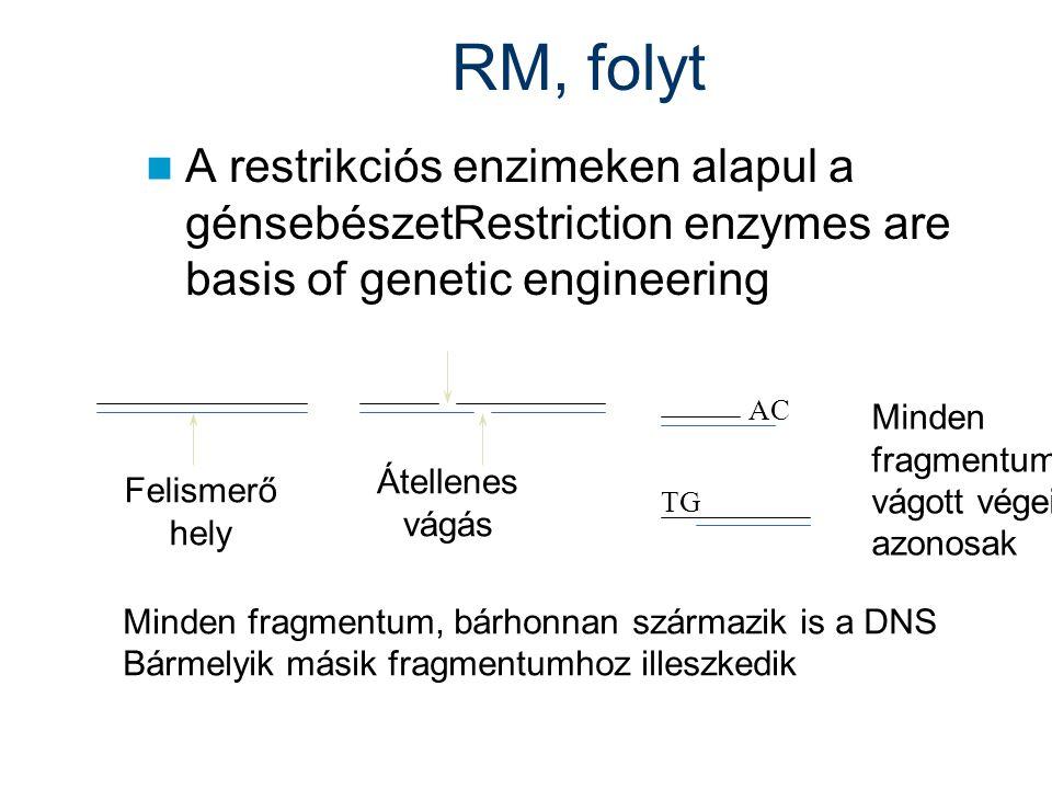 RM, folyt A restrikciós enzimeken alapul a génsebészetRestriction enzymes are basis of genetic engineering Felismerő hely Átellenes vágás Minden fragm