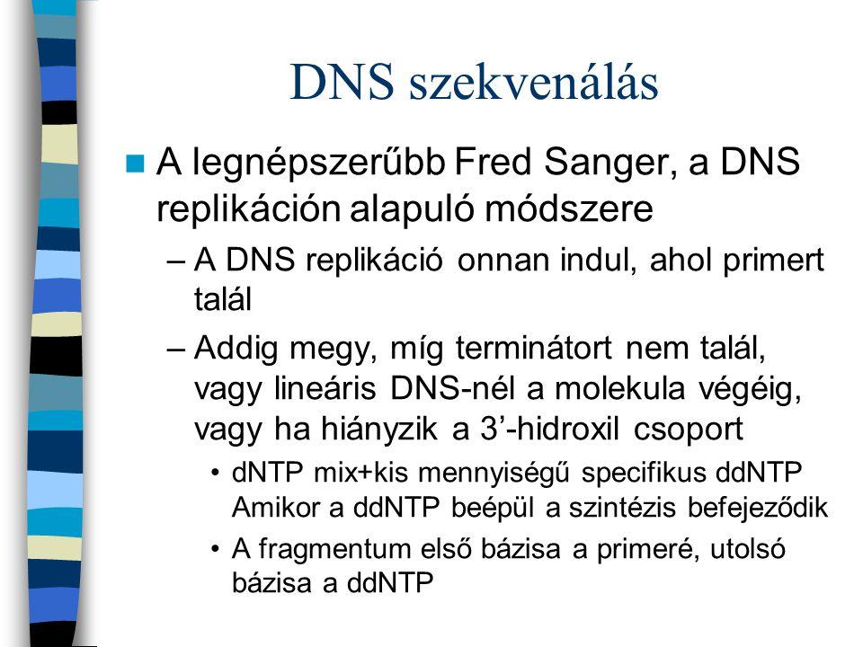 DNS szekvenálás A legnépszerűbb Fred Sanger, a DNS replikáción alapuló módszere –A DNS replikáció onnan indul, ahol primert talál –Addig megy, míg ter