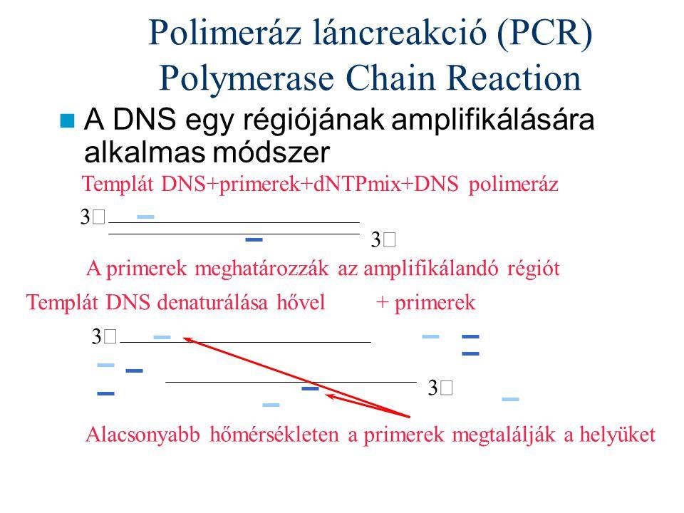Polimeráz láncreakció (PCR) Polymerase Chain Reaction A DNS egy régiójának amplifikálására alkalmas módszer Templát DNS+primerek+dNTPmix+DNS polimeráz