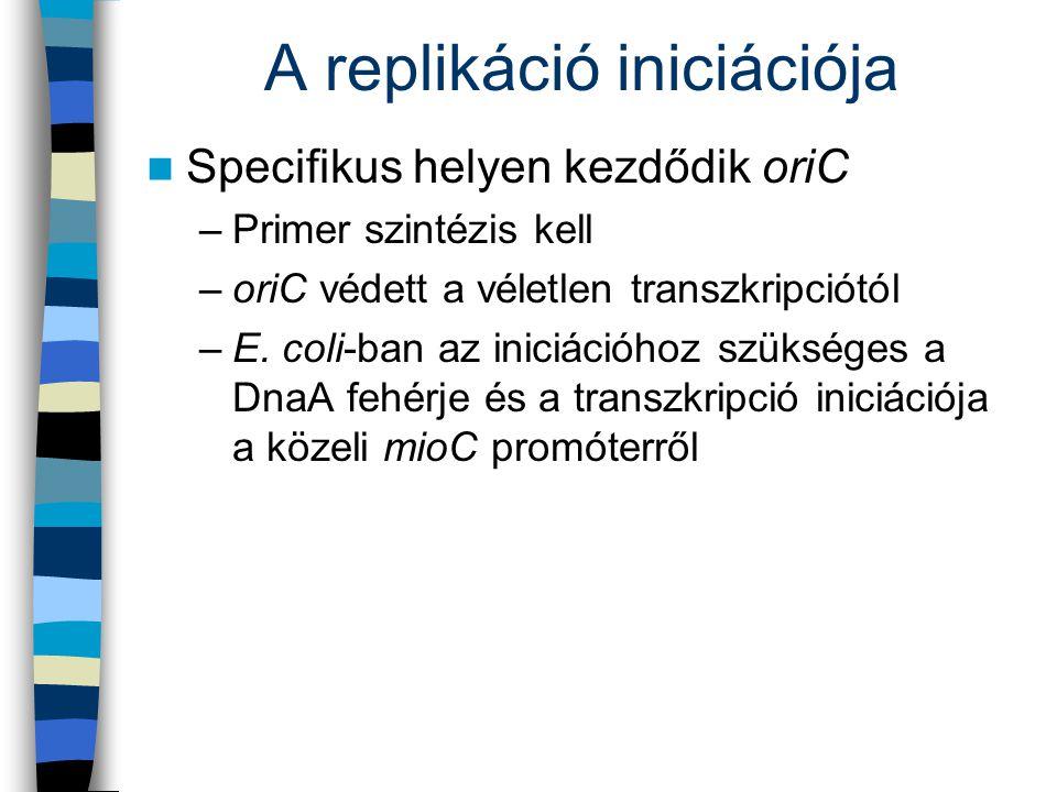 A replikáció iniciációja Specifikus helyen kezdődik oriC –Primer szintézis kell –oriC védett a véletlen transzkripciótól –E. coli-ban az iniciációhoz
