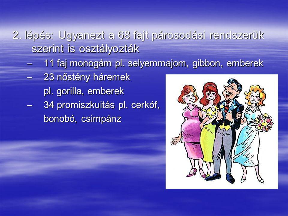 3.lépés: összevetik az előbbieket MonogámPoligámPromiszk.