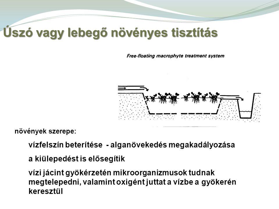 Úszó vagy lebegő növényes tisztítás növények szerepe: vízfelszín beterítése - alganövekedés megakadályozása a kiülepedést is elősegítik vízi jácint gy