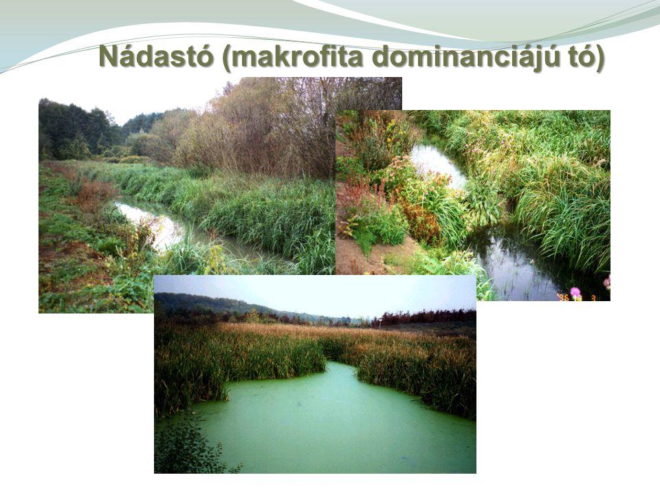 Nádastó (makrofita dominanciájú tó)