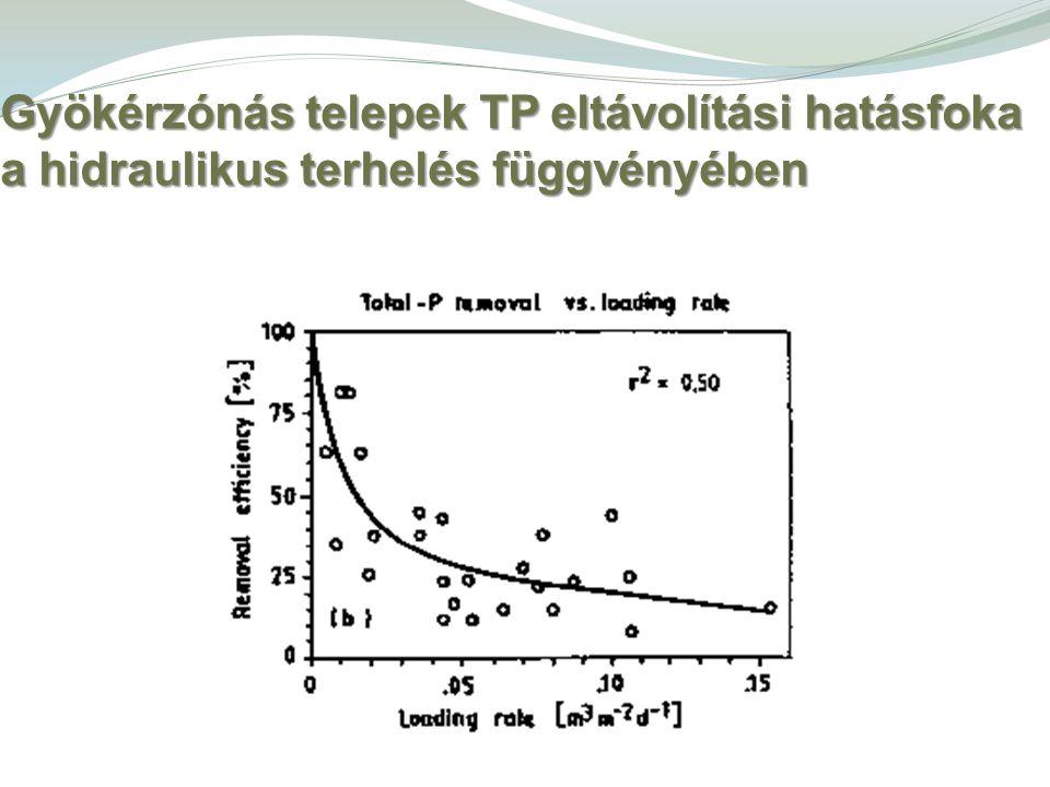 Gyökérzónás telepek TP eltávolítási hatásfoka a hidraulikus terhelés függvényében