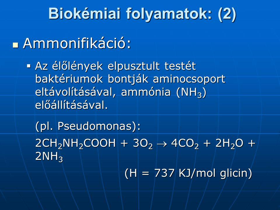 Biokémiai folyamatok: (2) Ammonifikáció: Ammonifikáció:  Az élőlények elpusztult testét baktériumok bontják aminocsoport eltávolításával, ammónia (NH