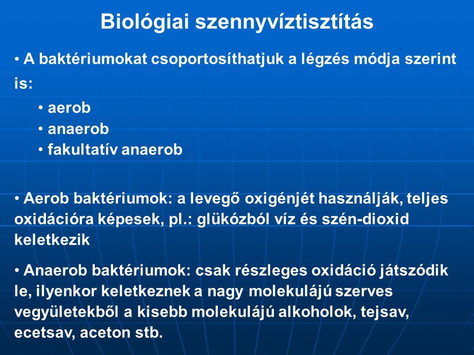 Biológiai szennyvíztisztítás A baktériumokat csoportosíthatjuk a légzés módja szerint is: aerob anaerob fakultatív anaerob Aerob baktériumok: a levegő