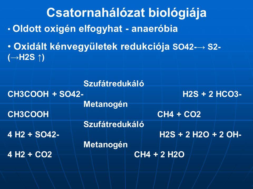 Csatornahálózat biológiája Oldott oxigén elfogyhat - anaeróbia Oxidált kénvegyületek redukciója SO42-→ S2- (→H2S ↑) Szufátredukáló CH3COOH + SO42- H2S