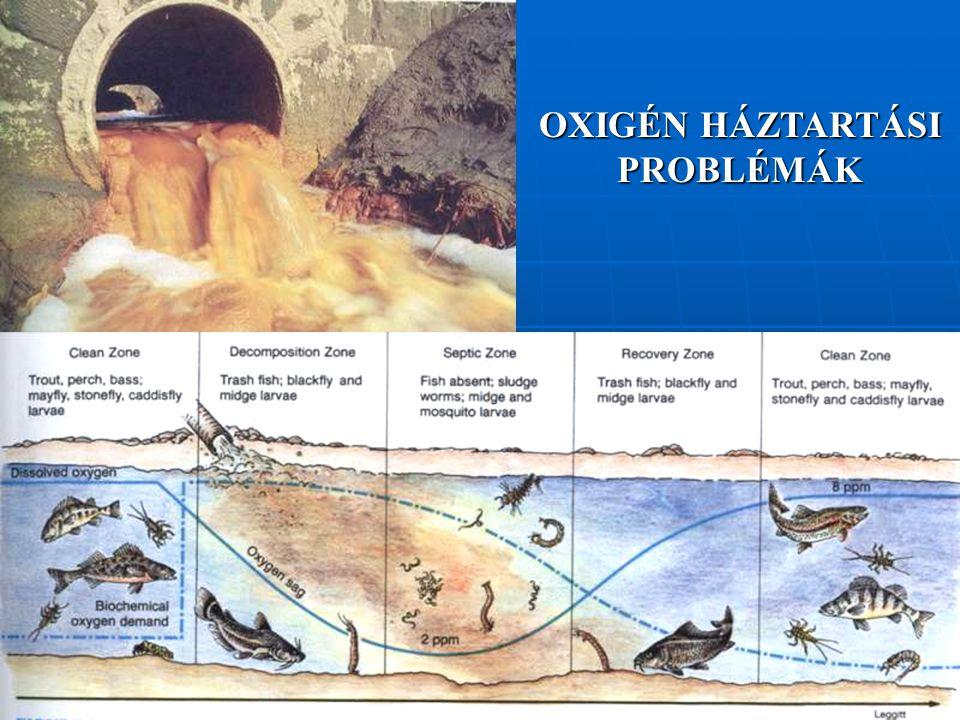 Felszíni vizek napi oxigéngörbéje