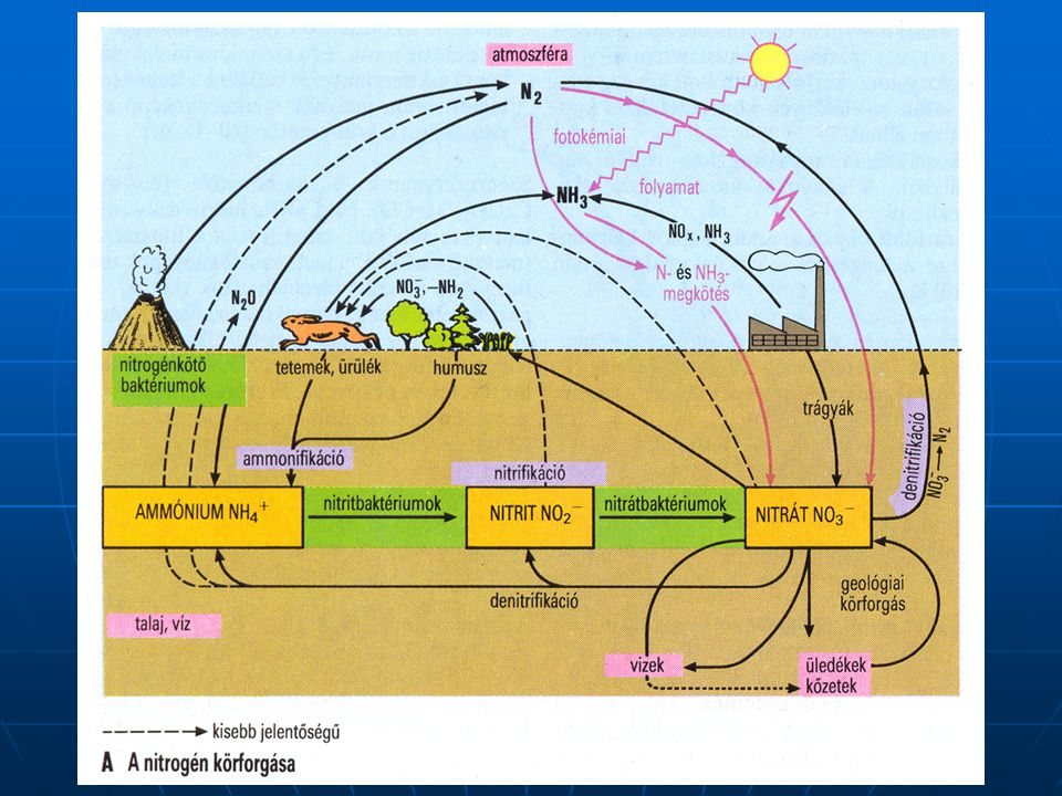 Biológiai szennyvíztisztítás A különböző szervezetek más-más módon veszik fel a tápanyagot Heterotróf szervezetek (szerves anyagot vesznek fel) Autotróf szervezetek (CO 2 -ból jutnak szénhez) Közbenső heterotrófok (mindkét forrás jó nekik) Az autotrófok lehetnek fotoautotrófok (pl.: zöld és bíbor színű kénbaktériumok), vagy kemoautotrófok (pl.: nitrifikáló baktériumok, vasbaktérimok).