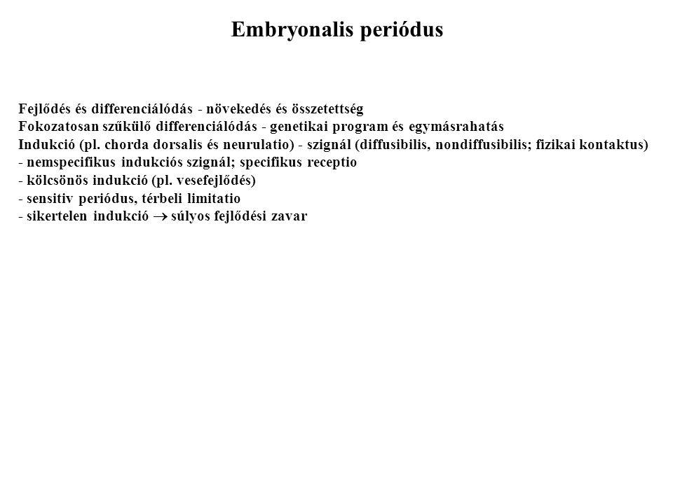 Embryonalis periódus Fejlődés és differenciálódás - növekedés és összetettség Fokozatosan szűkülő differenciálódás - genetikai program és egymásrahatás Indukció (pl.