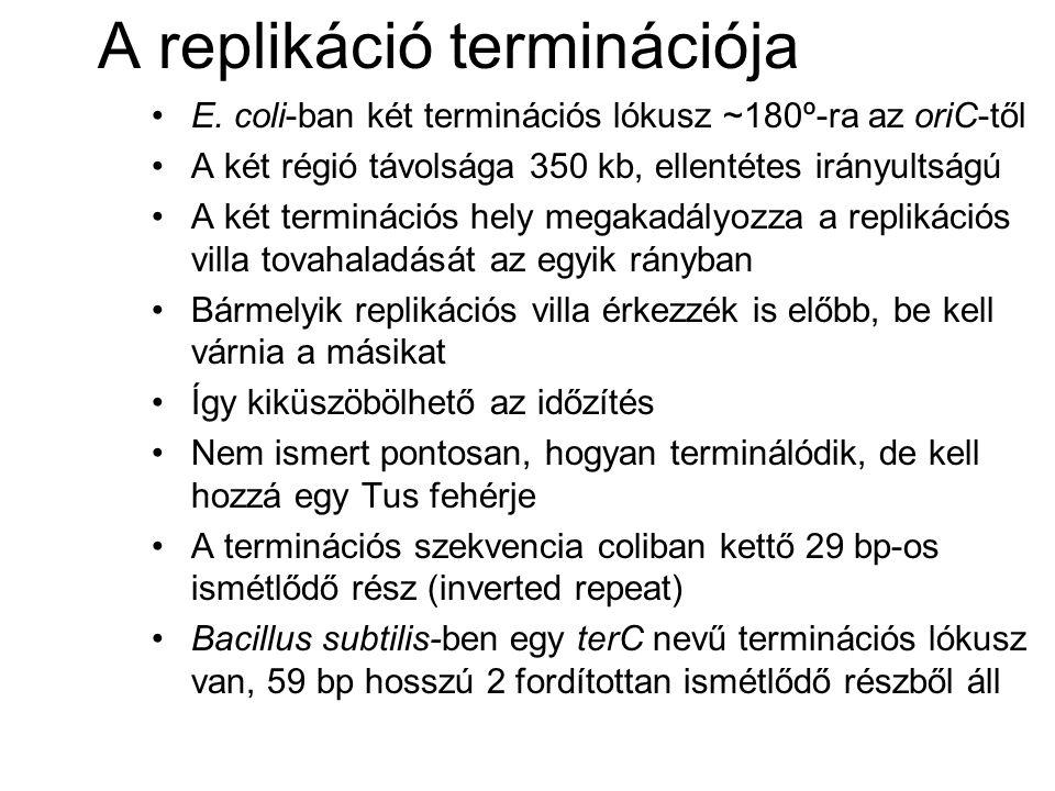 A replikáció terminációja E. coli-ban két terminációs lókusz ~180º-ra az oriC-től A két régió távolsága 350 kb, ellentétes irányultságú A két terminác
