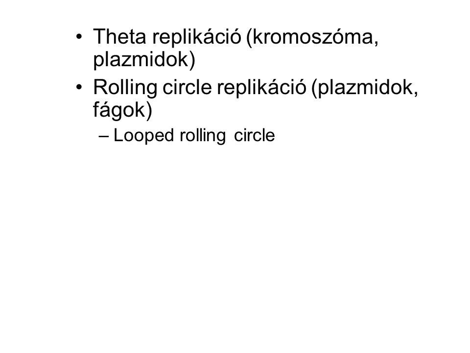 Theta replikáció (kromoszóma, plazmidok) Rolling circle replikáció (plazmidok, fágok) –Looped rolling circle