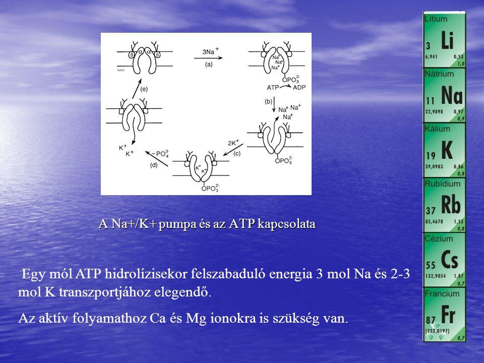 A Na+/K+ pumpa és az ATP kapcsolata Egy mól ATP hidrolízisekor felszabaduló energia 3 mol Na és 2-3 mol K transzportjához elegendő. Az aktív folyamath