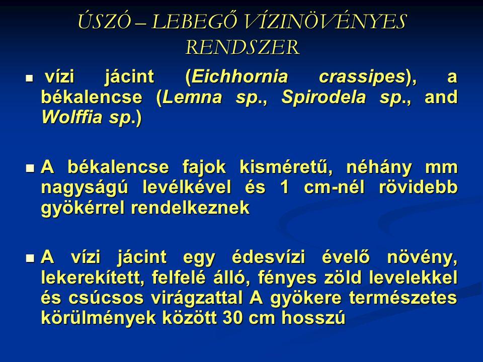 ÚSZÓ – LEBEGŐ VÍZINÖVÉNYES RENDSZER vízi jácint (Eichhornia crassipes), a békalencse (Lemna sp., Spirodela sp., and Wolffia sp.) vízi jácint (Eichhorn