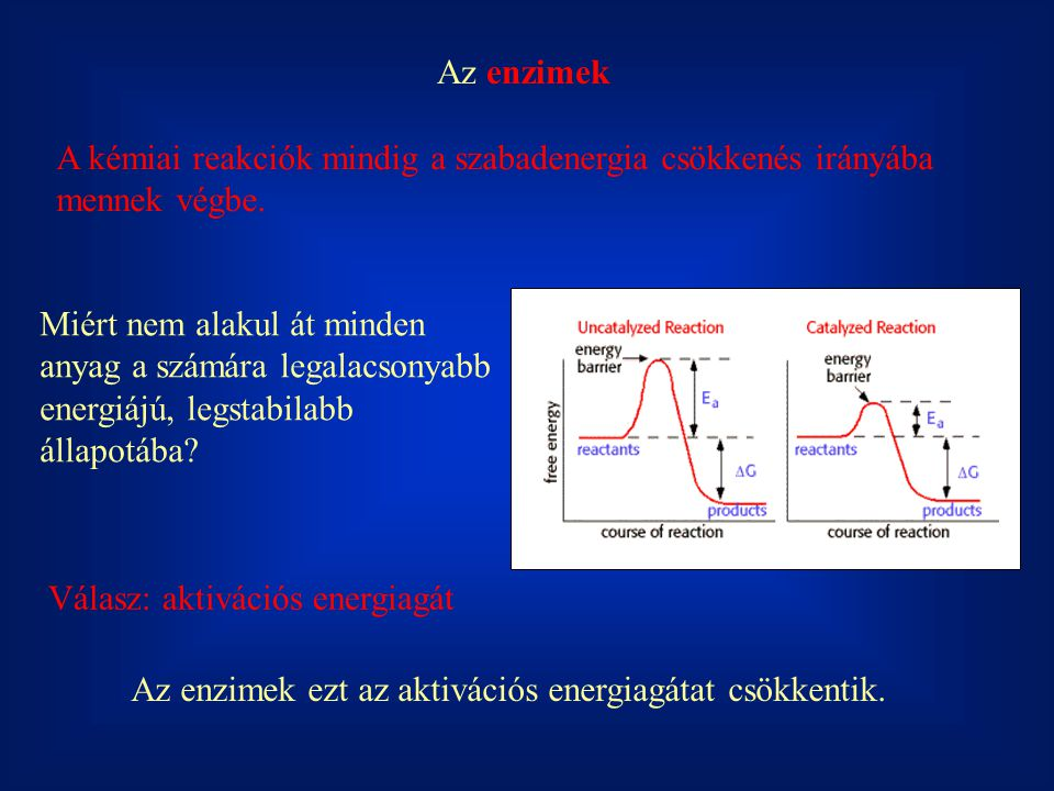 Az enzimek A kémiai reakciók mindig a szabadenergia csökkenés irányába mennek végbe. Miért nem alakul át minden anyag a számára legalacsonyabb energiá