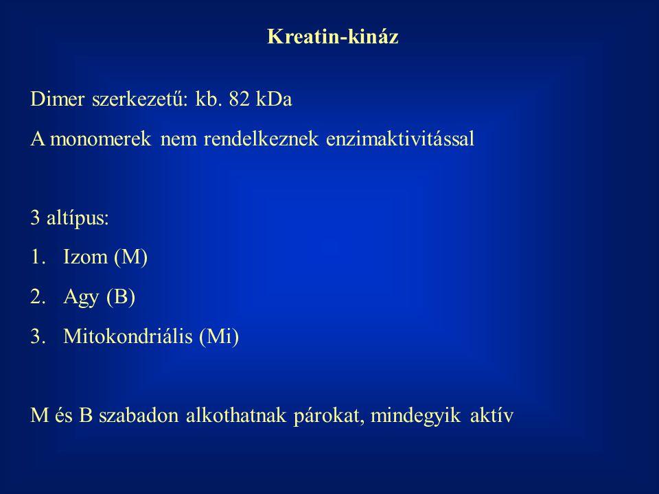 Kreatin-kináz Dimer szerkezetű: kb. 82 kDa A monomerek nem rendelkeznek enzimaktivitással 3 altípus: 1.Izom (M) 2.Agy (B) 3.Mitokondriális (Mi) M és B