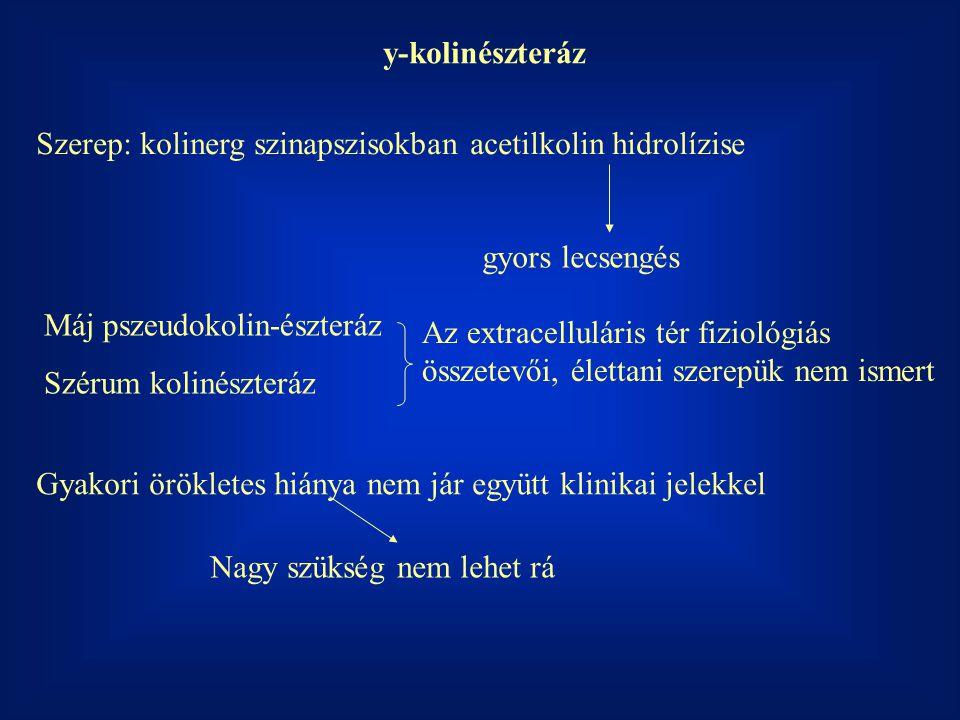 y-kolinészteráz Szerep: kolinerg szinapszisokban acetilkolin hidrolízise gyors lecsengés Máj pszeudokolin-észteráz Szérum kolinészteráz Az extracellul