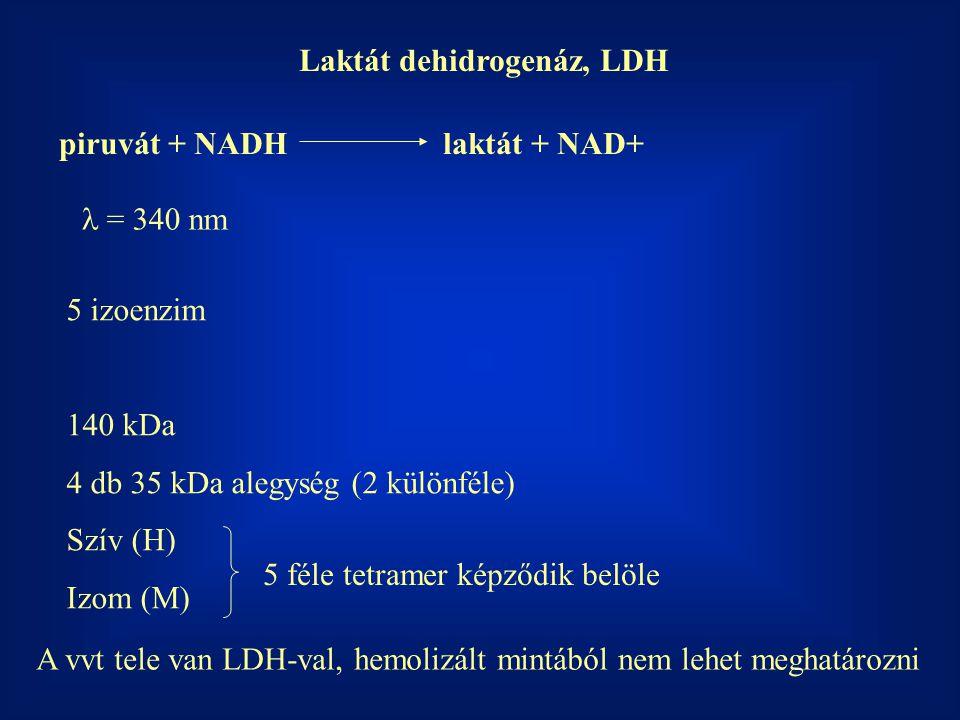 Laktát dehidrogenáz, LDH piruvát + NADHlaktát + NAD+ = 340 nm 5 izoenzim 140 kDa 4 db 35 kDa alegység (2 különféle) Szív (H) Izom (M) 5 féle tetramer