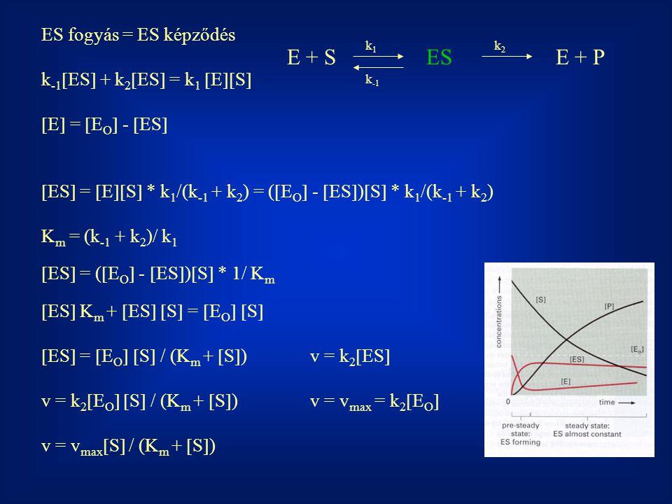 ES fogyás = ES képződés k -1  ES  + k 2  ES  = k 1  E  S   E  =  E O  -  ES   ES  =  E  S  * k 1 /(k -1 + k 2 ) = (  E O  -  ES