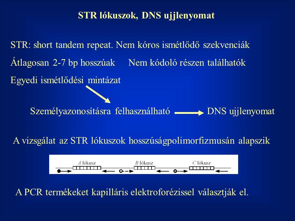 STR lókuszok, DNS ujjlenyomat STR: short tandem repeat. Nem kóros ismétlődő szekvenciák Átlagosan 2-7 bp hosszúakNem kódoló részen találhatók Egyedi i