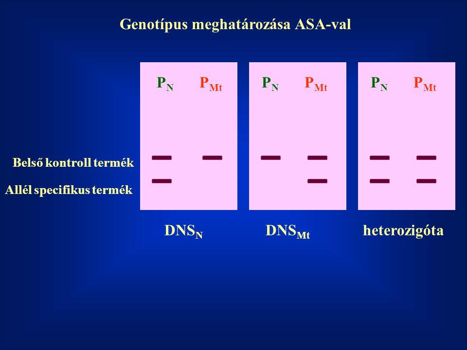 Genotípus meghatározása ASA-val PNPN P Mt PNPN PNPN Belső kontroll termék Allél specifikus termék DNS N DNS Mt heterozigóta