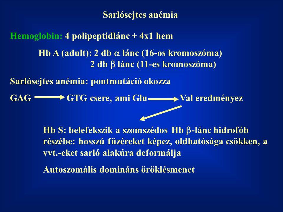 Sarlósejtes anémia Hemoglobin: 4 polipeptidlánc + 4x1 hem Hb A (adult): 2 db  lánc (16-os kromoszóma) 2 db  lánc (11-es kromoszóma) Sarlósejtes an