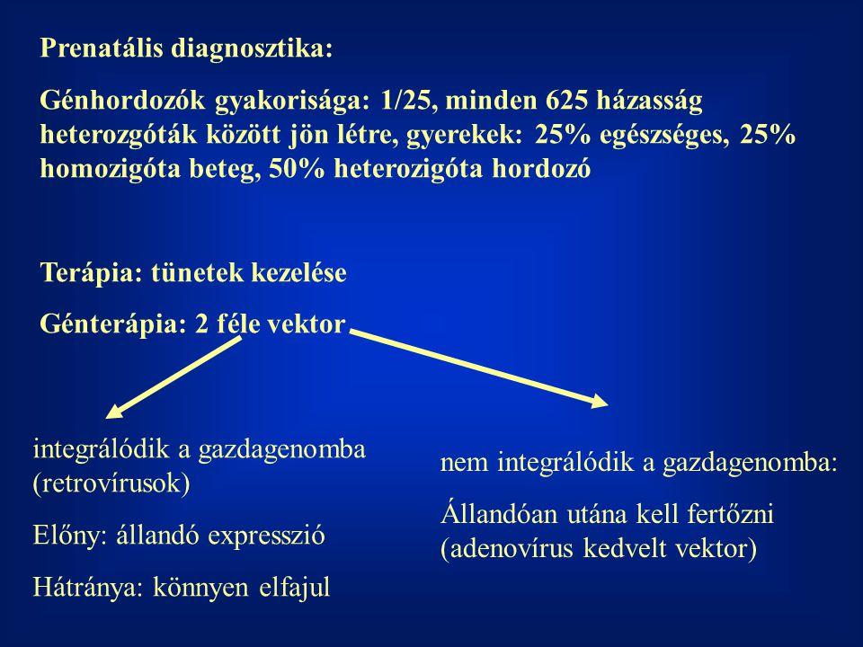 Prenatális diagnosztika: Génhordozók gyakorisága: 1/25, minden 625 házasság heterozgóták között jön létre, gyerekek: 25% egészséges, 25% homozigóta be