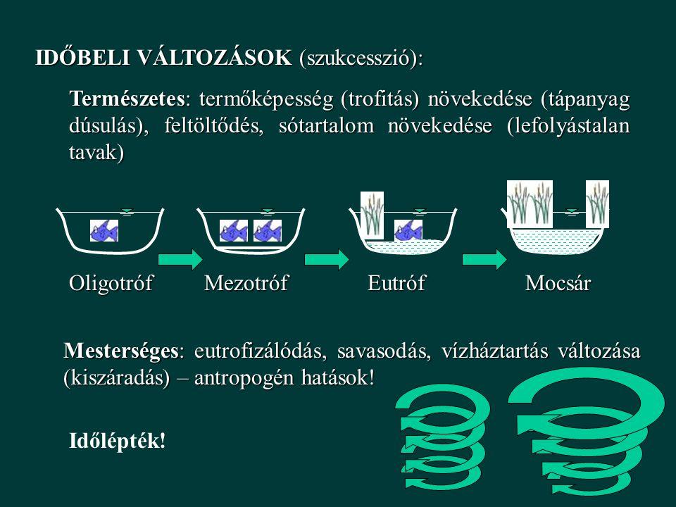 IDŐBELI VÁLTOZÁSOK (szukcesszió): Természetes: termőképesség (trofitás) növekedése (tápanyag dúsulás), feltöltődés, sótartalom növekedése (lefolyástalan tavak) Mesterséges: eutrofizálódás, savasodás, vízháztartás változása (kiszáradás) – antropogén hatások.