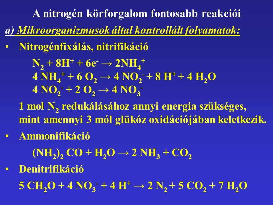 A nitrogén körforgalom fontosabb reakciói a) Mikroorganizmusok által kontrollált folyamatok: Nitrogénfixálás, nitrifikáció N2 N2 + 8H + + 6e - → 2NH 4