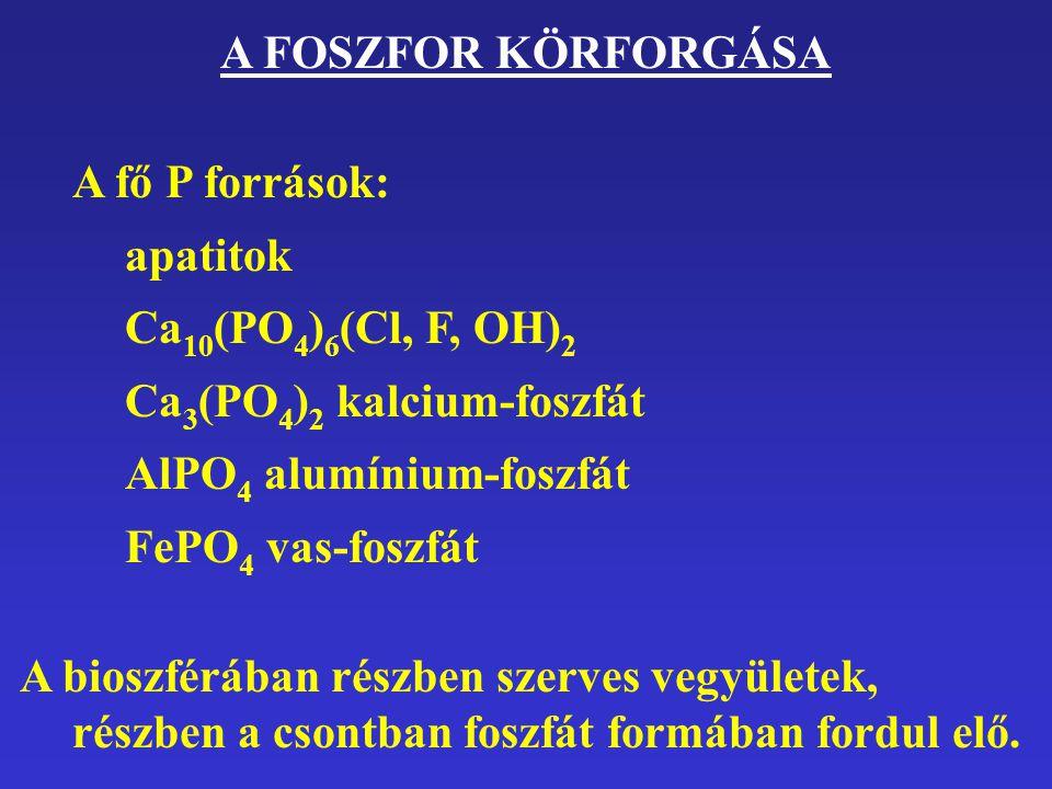 A FOSZFOR KÖRFORGÁSA A fő P források: apatitok Ca 10 (PO 4 ) 6 (Cl, F, OH) 2 Ca 3 (PO 4 ) 2 kalcium-foszfát AlPO 4 alumínium-foszfát FePO 4 vas-foszfá