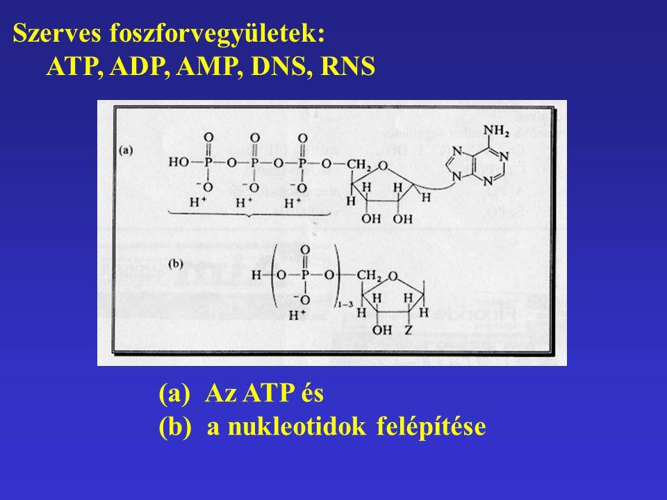 Szerves foszforvegyületek: ATP, ADP, AMP, DNS, RNS (a) Az ATP és (b) a nukleotidok felépítése