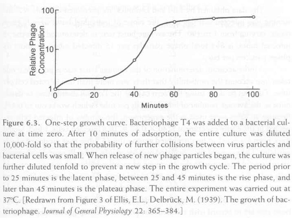 """Az átlagos """"burst méret, az egy sejtből kiszabadult virionok száma A fenti görbéből a plató és látens fázis közötti arány az átlagos """"burst size"""