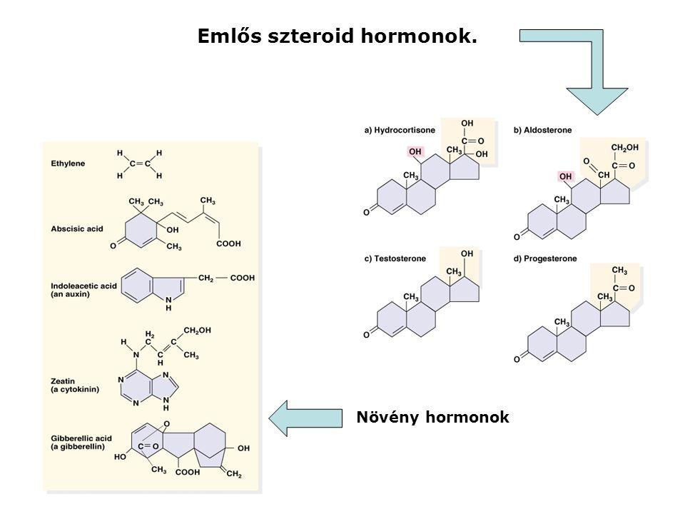 Emlős szteroid hormonok. Növény hormonok