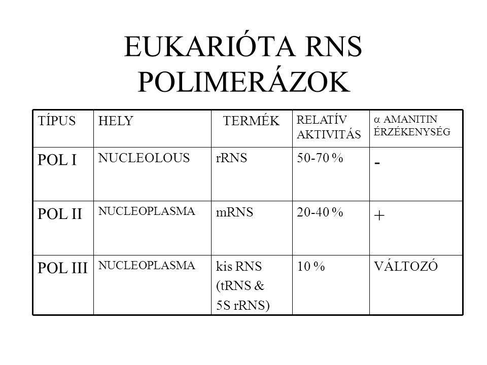 Prokarióta RNS polimeráz