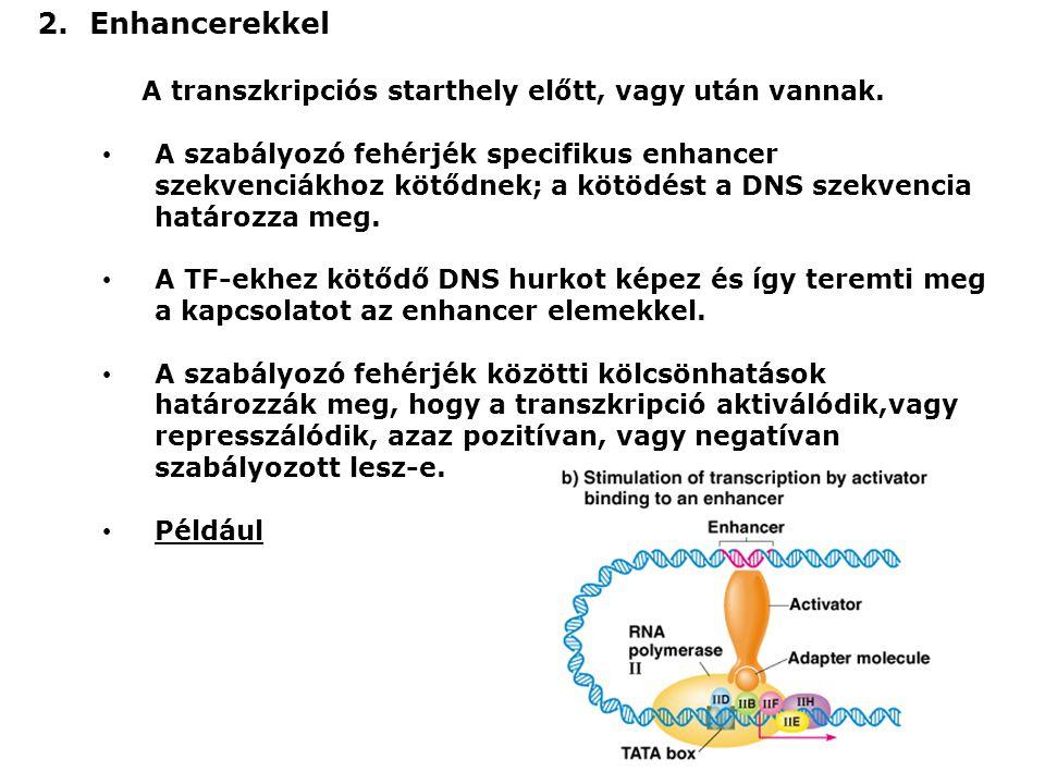 Még a promóterekről és az enhancerekről: Néhány szabályozó fehérje minden sejttípusban van, mások specifikusak.
