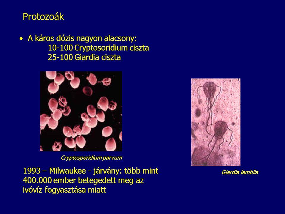 Giardia lamblia Cryptosporidium parvum Protozoák 1993 – Milwaukee - járvány: több mint 400.000 ember betegedett meg az ivóvíz fogyasztása miatt A káro