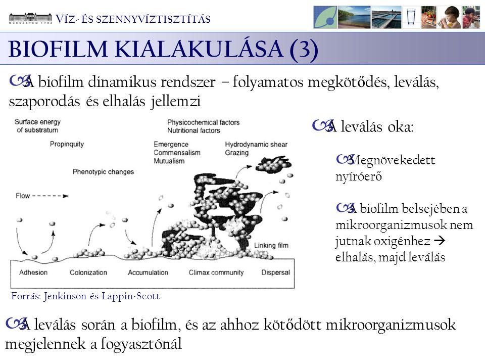 BIOFILM KIALAKULÁSA (3) Forrás: Jenkinson és Lappin-Scott  A biofilm dinamikus rendszer – folyamatos megköt ő dés, leválás, szaporodás és elhalás jellemzi  A leválás oka:  Megnövekedett nyíróer ő  A biofilm belsejében a mikroorganizmusok nem jutnak oxigénhez  elhalás, majd leválás  A leválás során a biofilm, és az ahhoz köt ő dött mikroorganizmusok megjelennek a fogyasztónál V ÍZ- ÉS SZENNYVÍZTISZTÍTÁS