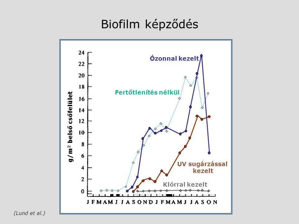 g/m 2 belső csőfelület Biofilm képződés (Lund et al.) Fertőtlenítés nélkül Klórral kezelt UV sugárzással kezelt Ózonnal kezelt