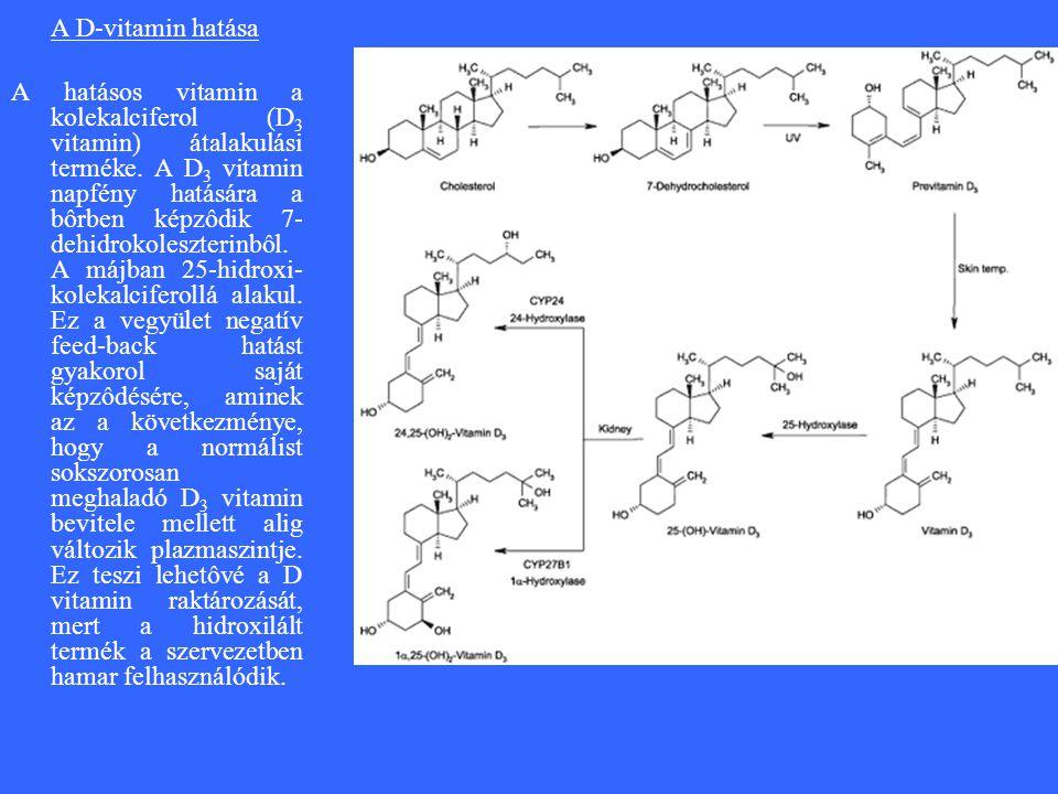 A D-vitamin hatása A hatásos vitamin a kolekalciferol (D 3 vitamin) átalakulási terméke.